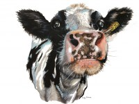 lucy-cortese---cow