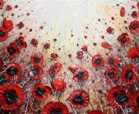 robert-cox---poppy-profussion