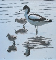 clive-meredith---avocet-and-chicks