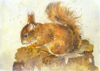 kate-wyatt---red-squirrel-study