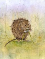 kate-wyatt---water-vole-snack