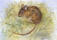 kate-wyatt---wood-mouse-hideaway