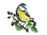 lucy-cortese---blue-tit