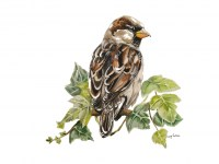 lucy-cortese---sparrow